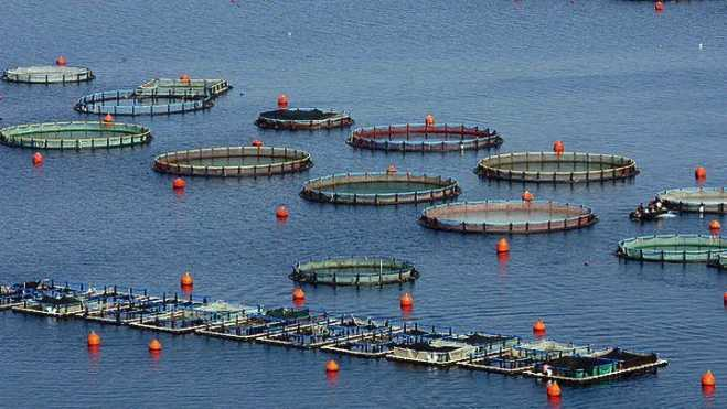 Greek aquaculture at exhibition in Boston in March