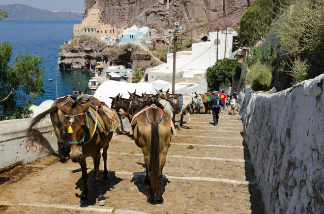 Campaign against overworking of donkeys and mules; seminar to be held in Santorini